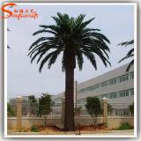 Chinesische Hersteller-große künstliche Daten-Palmen für Garten-Dekoration