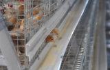 家禽の家のためのタイプフレームの初生鶏及び小さい鶏のケージシステム