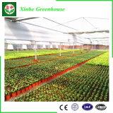 花のための農業のプラスチックフィルムの温室