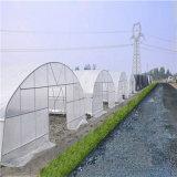 Túnel único 200 mícrons de filme plástico com efeito de tomate para o Oriente Médio