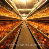 Schicht-Huhn-Batterie-Geflügel-landwirtschaftliche Maschinen