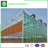 Green House avec double/simple vitrage et Structure en alliage en aluminium
