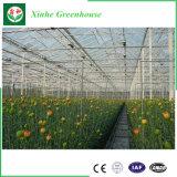 Tipo de Efecto Invernadero de policarbonato de Venlo moderno para la Agricultura Plantación
