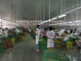 Armazenamento frio do grande tamanho para o processamento e o armazenamento de vegetais