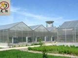 زراعة وتجاريّة فحمات متعدّدة دفيئة