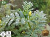 De Natuurlijke Saponienen Tribulus van uitstekende kwaliteit 40%~98% Uittreksel van Tribulus Terrestris