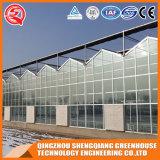 Landwirtschaft Multi-Überspannung ausgeglichenes Glas-grünes Haus mit Hydroponik Stsyem