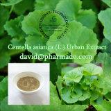 Centella Asiatica 100% naturel séché (L.) Poudre d'herbe entière urbaine