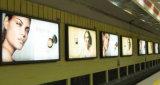 La película de PET con retroiluminación 100 micrófono para la impresión de inyección de tinta