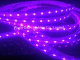 Tira de LEDS de alto brillo con aprobación CE de color púrpura