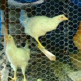 Ячеистая сеть цыпленка 1/2' x 0.4mm гальванизированная 3/4' шестиугольная