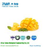 Polvere naturale del mango di alta qualità di iso 100% con buon gusto