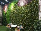Высокое качество Искусственные растения и цветы Зеленая Стена Gu20170523104636