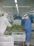 Produtividade elevada armazenamento frio integrado personalizado para frutas mantimento e processamento frescos dos vegetais