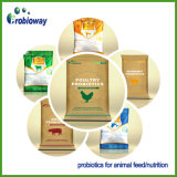 Poudre alkaline d'additif de bétail de protéase d'enzymes d'alimentation des animaux