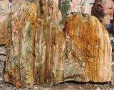 De natuurlijke Steen van het Landschap voor het Ornament van de Tuin (t-001)