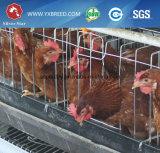 Un type de conteneur pour les couches de poulet en Afrique ferme
