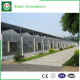 Láminas de policarbonato transparente de alta calidad de los invernaderos para la Agricultura