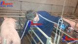 Vieh-Wiedergabe-Ultraschall-Scannen für Schwangerschaft