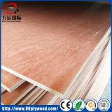 Chapa madera contrachapada comercial de madera de Thimber de Bintangor del grado de BB/CC/del madera de construcción/madera para los muebles