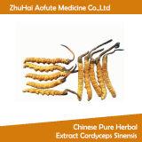 中国の純粋な草のエキスCordyceps Sinensis