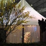 Grandes tiendas de catering de lujo Decoración con revestimientos de techo y cortinas