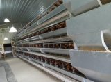 10000 uccelli Capacity Type e Bird Use Chicken Poultry Farm Equipment da vendere
