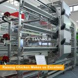 Système de cage de poulet des matériels de ferme avicole