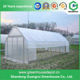 Fabrication professionnelle de serre chaude de légume/fleur d'agriculture en Chine