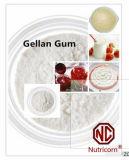 최신 판매 Gellan 실리콘껌 힘