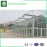 Invernadero multi barato del vidrio de Agricultureal del palmo
