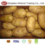 Batatas inteiras frescas da qualidade superior