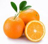 Frais de nombril Orange (48/56/64/72/80/88/100/113)