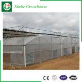 Qualitäts-Glasgewächshaus mit Kühlsystem für die Landwirtschaft