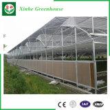PC Blatt-grünes Haus Pocarbonate Gewächshaus mit Wasserkultur