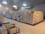 Chinesischer Karton, der normalen weißen frischen Knoblauch packt