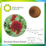 Rhodiola Rosea Uittreksel, Salidroside 1%-3%, Rosavin 1%-3%