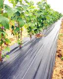 3%の紫外線農業の地被植物ファブリックはPAHsテストに合格した
