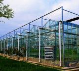 Ausgeglichenes Glasshouse Glass mit Cer Certificate, Mistlite, Nasiji Design oder Ultra Clea