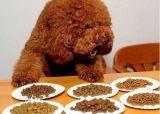 Volwassen Hoog Voedsel voor huisdieren - eiwitKoekje voor Hond