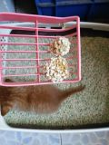 Katze-Sänfte des Katze König-Tofu--Einfache Schaufel weg