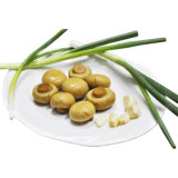 Fungo affettato inscatolato alimento naturale in alimento inscatolato dello stagno