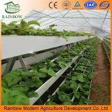 Poco costoso e pratico coltivare le piantatrici per il sistema di acquicoltura