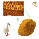 Jaune La farine de gluten de maïs de grade d'alimentation de 60 % de protéines en poudre