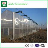 최신 판매 청과 온실 농업 온실 유리 온실