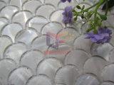 La madreperla bianca della scala di pesci ha fatto il mosaico (CFP137)