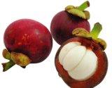 Extracto del mangostán de Mangostin para los suplementos y los alimentos