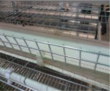 Geflügelfarm-neues automatisches Brüter-Huhn-Rahmen-Geräten-System (ein Typ Rahmen)