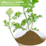 La Artemisia vulgaris extraer