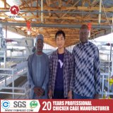 Cage de la couche de poulet automatique pour la vente au Ghana